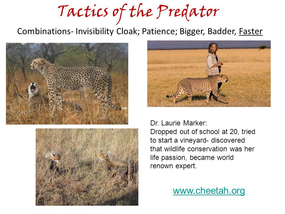 Tactics of the Predator Combinations- Invisibility Cloak; Patience; Bigger, Badder, Faster Dr.