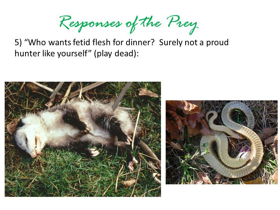 Responses of the Prey 5) Who wants fetid flesh for dinner.