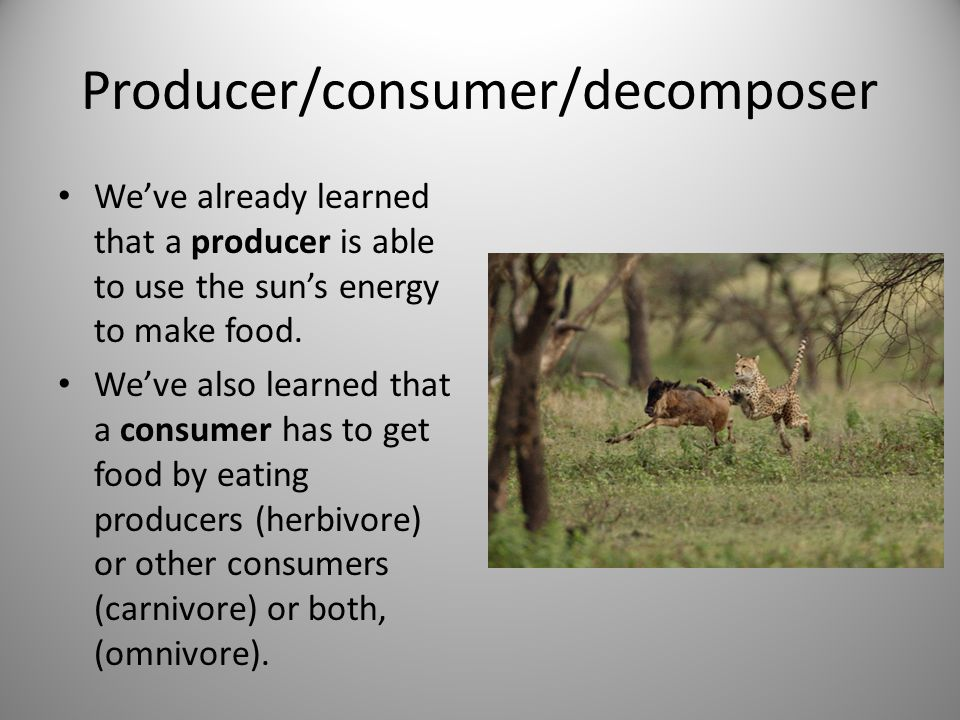 Producer/consumer/decomposer We've already learned that a producer is able to use the sun's energy to make food.