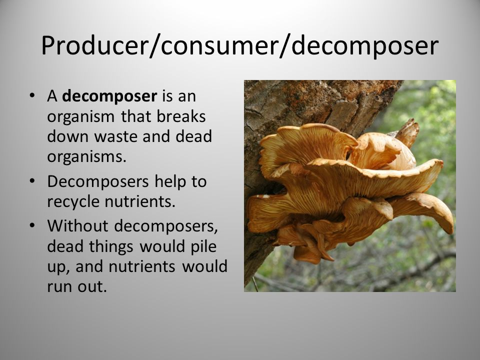 Producer/consumer/decomposer A decomposer is an organism that breaks down waste and dead organisms.