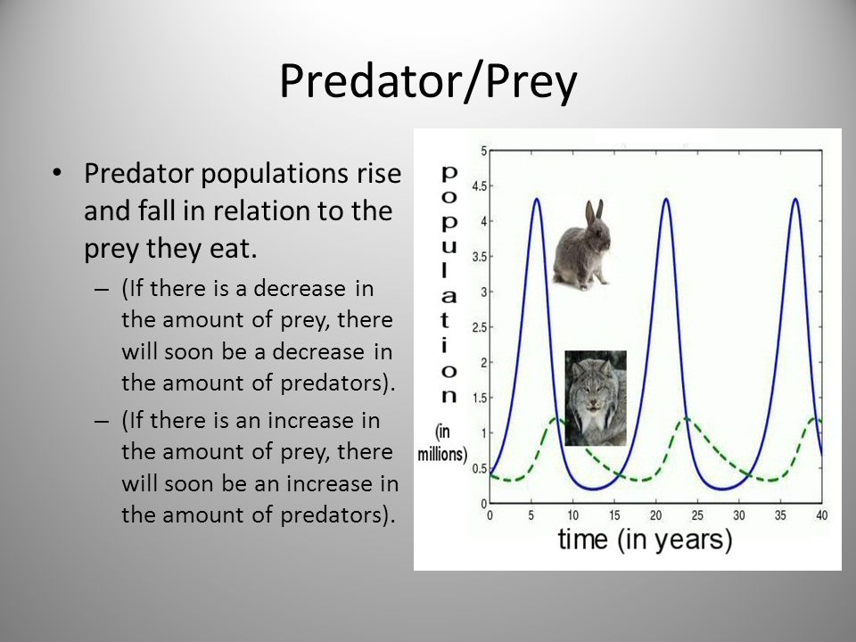 Predator/Prey Predator populations rise and fall in relation to the prey they eat.