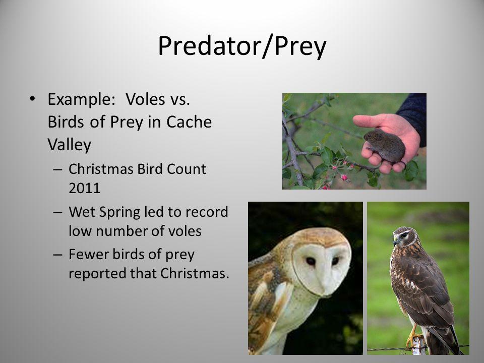 Predator/Prey Example: Voles vs.