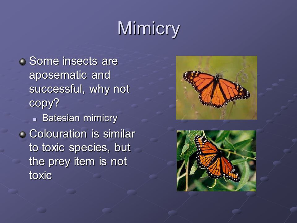 Mimicry Some insects are aposematic and successful, why not copy.