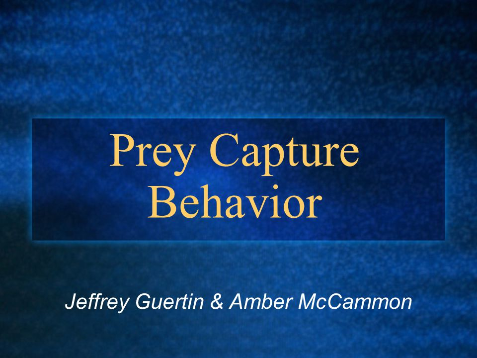 Prey Capture Behavior Jeffrey Guertin & Amber McCammon