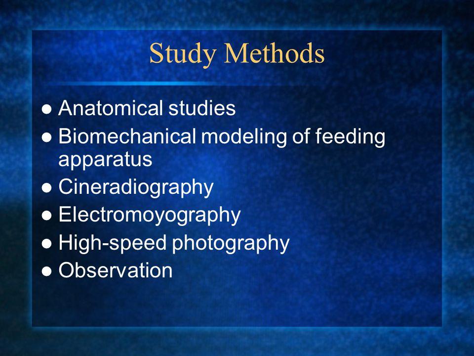 Skeletal Anatomy of Fish www.sju.edu