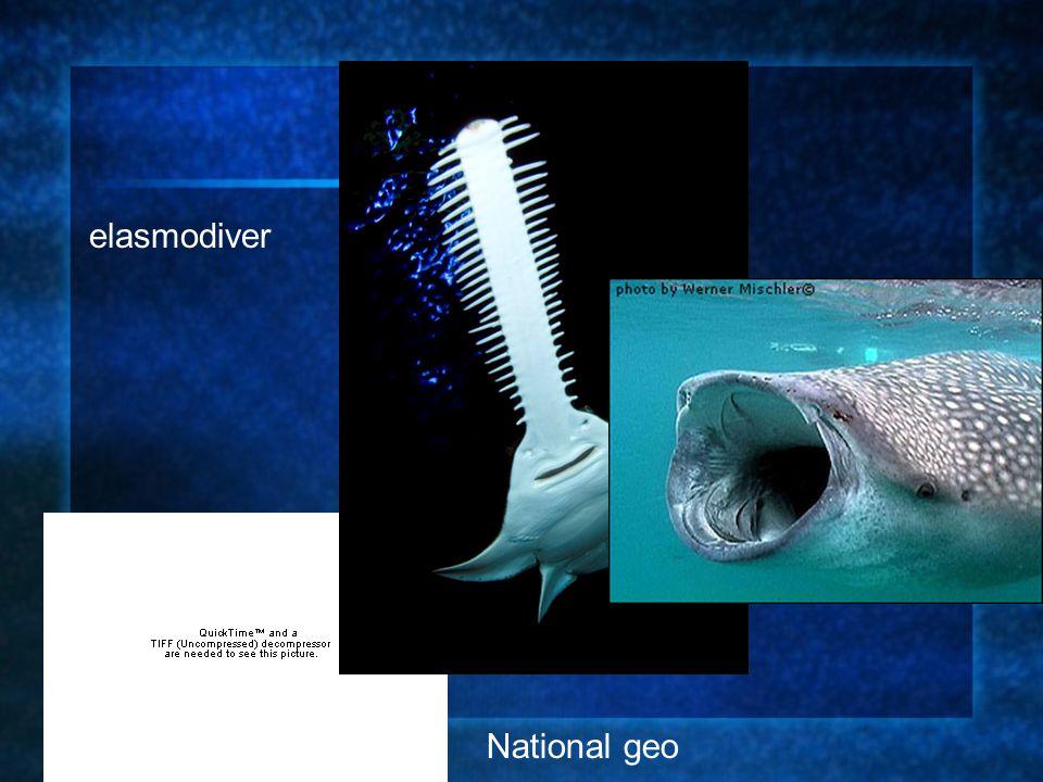 elasmodiver National geo