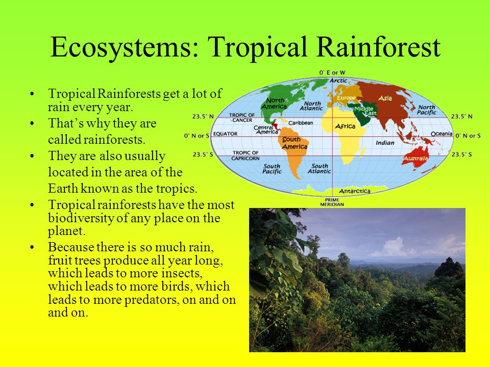 Ecosystems: Tropical Rainforest Tropical Rainforests get a lot of rain every year. That's why they are called rainforests. They are also usually locat