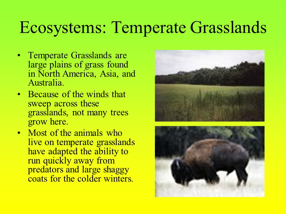 Ecosystems: Temperate Grasslands Temperate Grasslands are large plains of grass found in North America, Asia, and Australia.