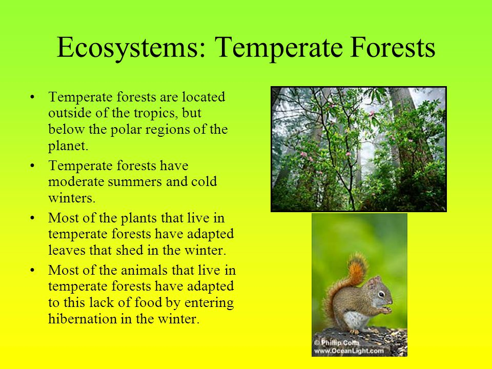 Ecosystems: Temperate Forests Temperate forests are located outside of the tropics, but below the polar regions of the planet. Temperate forests have