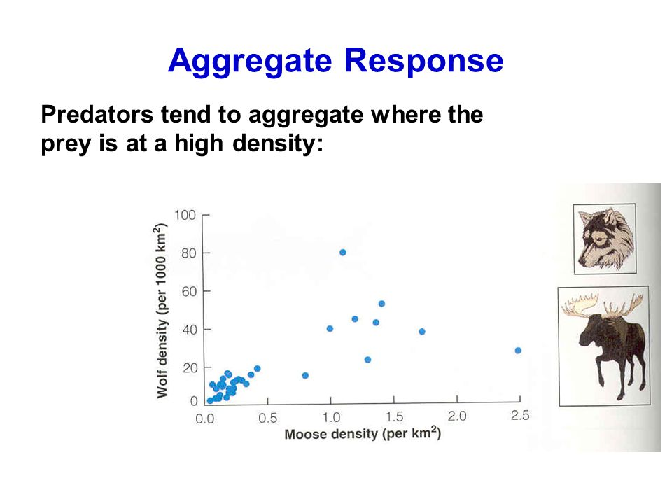 Aggregate Response Predators tend to aggregate where the prey is at a high density: