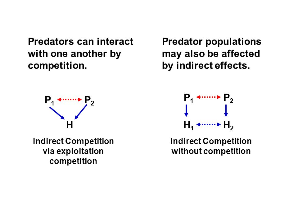 P1P1 P2P2 H P1P1 P2P2 H1H1 H2H2 Indirect Competition via exploitation competition Indirect Competition without competition Predators can interact with one another by competition.