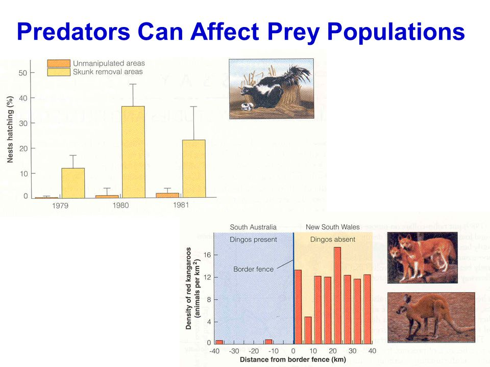 Predators Can Affect Prey Populations