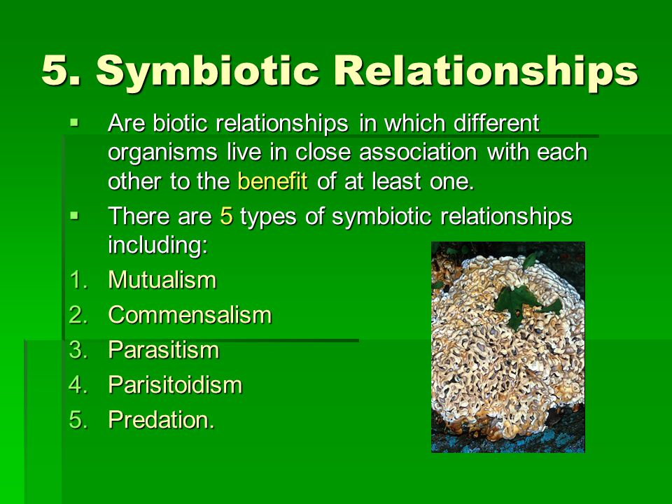 5. Symbiotic Relationships  Are biotic relationships in which different organisms live in close association with each other to the benefit of at leas