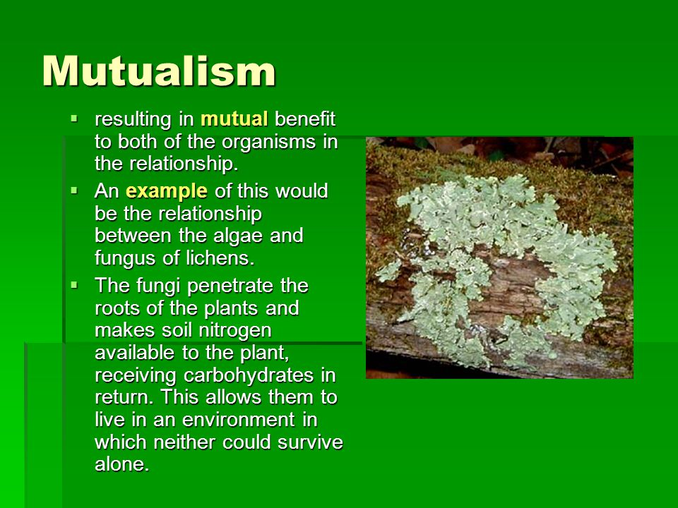 Mutualism  resulting in mutual benefit to both of the organisms in the relationship.  An example of this would be the relationship between the algae