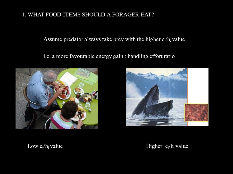 1. WHAT FOOD ITEMS SHOULD A FORAGER EAT.
