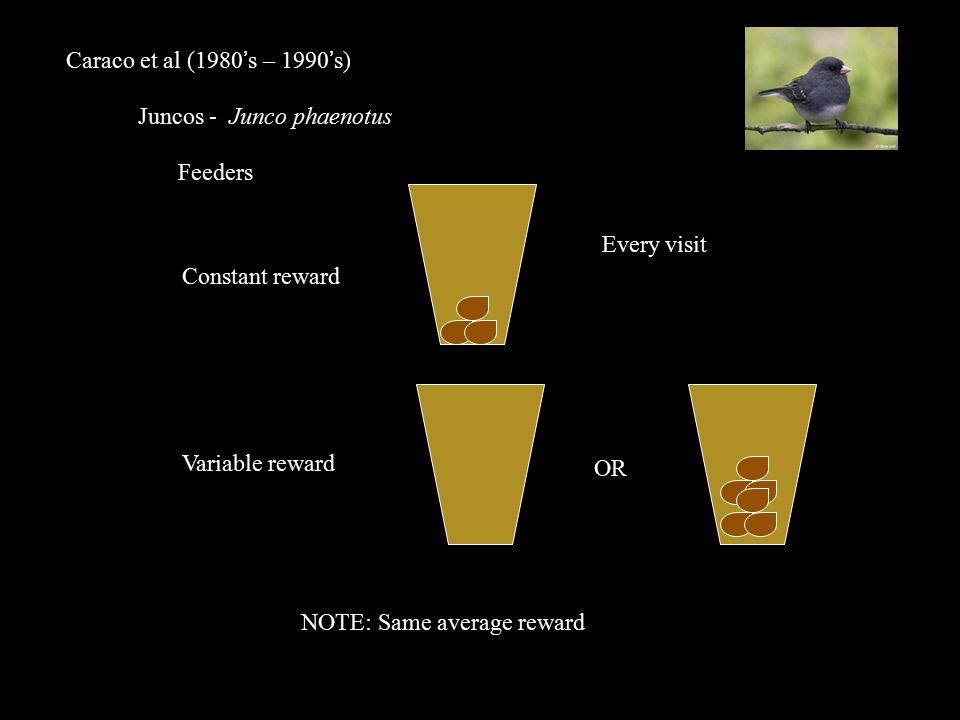 Caraco et al (1980's – 1990's) Juncos - Junco phaenotus Feeders Every visit OR NOTE: Same average reward Constant reward Variable reward