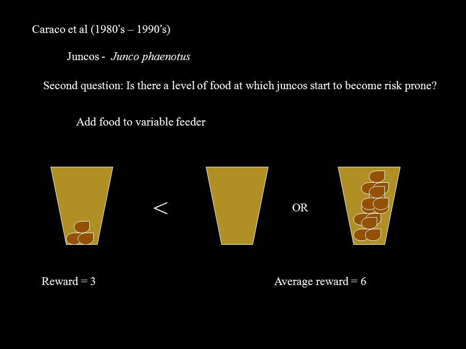 Caraco et al (1980's – 1990's) Juncos - Junco phaenotus OR Second question: Is there a level of food at which juncos start to become risk prone.