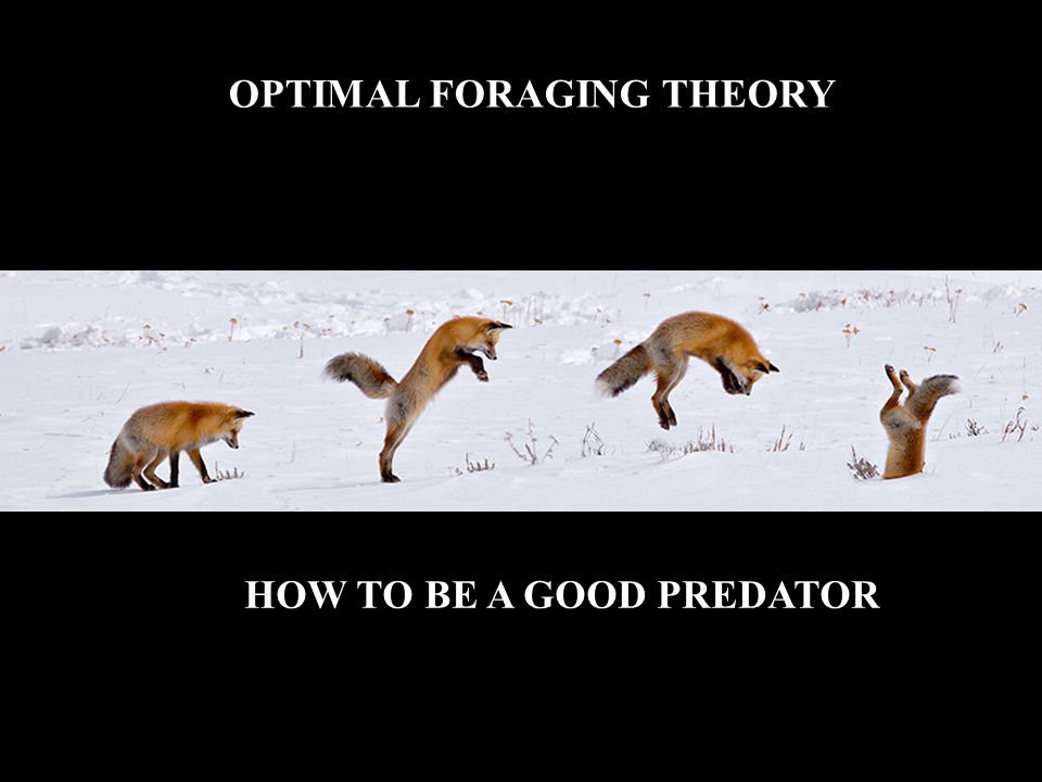 Modifications to Optimal Foraging Models Risk Sensitive Foraging Consider 3 foragers: Forager A - should show no preference for either type of patch Forager B - should be risk averse (forage in patch 1) Forager C - should be risk prone (forage in patch 2)