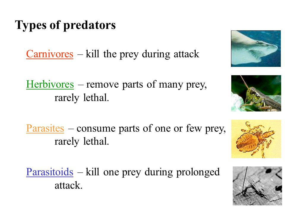 Types of predators Carnivores – kill the prey during attack Herbivores – remove parts of many prey, rarely lethal.