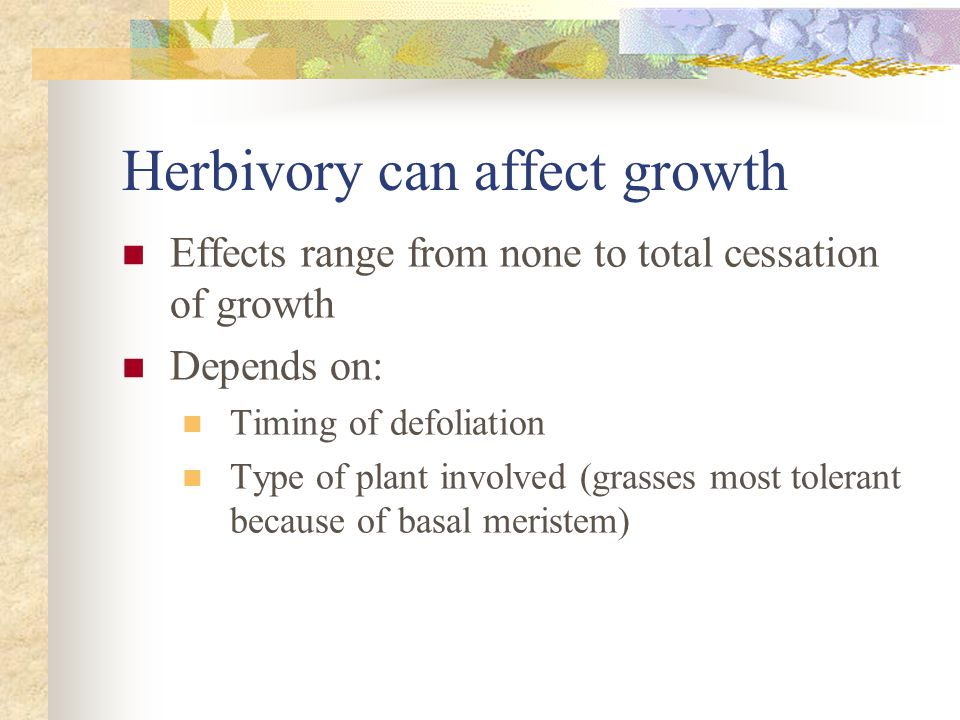 Herbivory can affect growth Effects range from none to total cessation of growth Depends on: Timing of defoliation Type of plant involved (grasses most tolerant because of basal meristem)