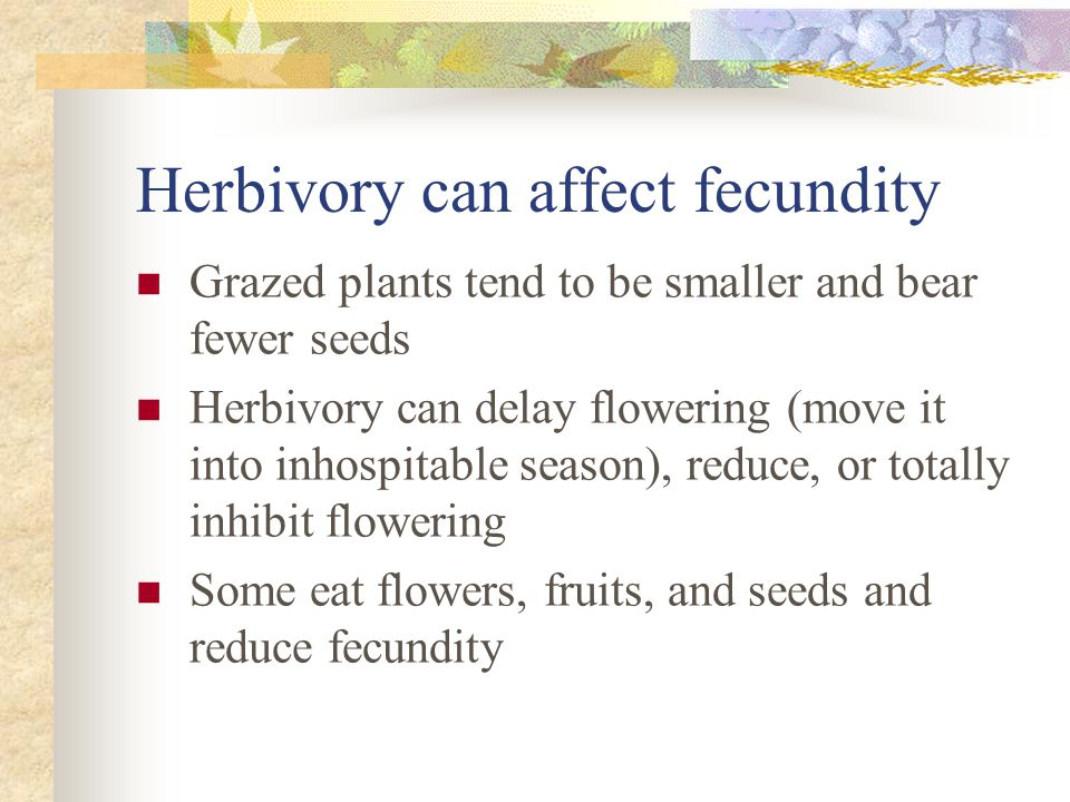 Herbivory can affect fecundity Grazed plants tend to be smaller and bear fewer seeds Herbivory can delay flowering (move it into inhospitable season), reduce, or totally inhibit flowering Some eat flowers, fruits, and seeds and reduce fecundity