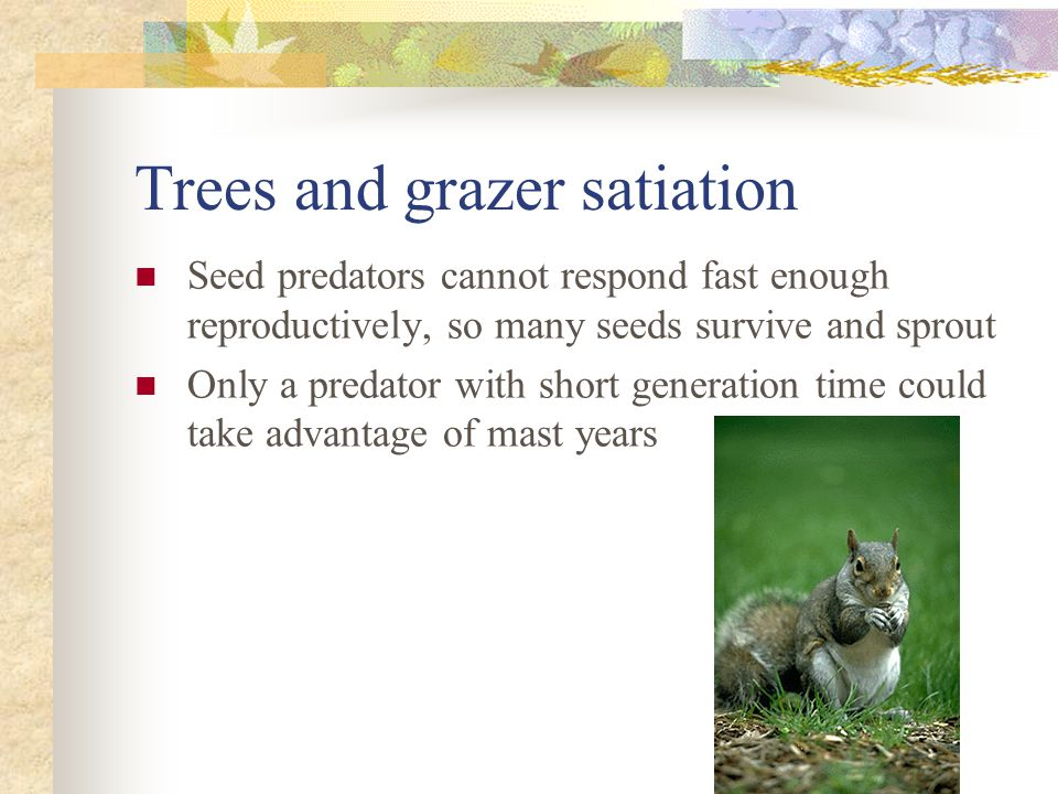 Trees and grazer satiation Seed predators cannot respond fast enough reproductively, so many seeds survive and sprout Only a predator with short generation time could take advantage of mast years