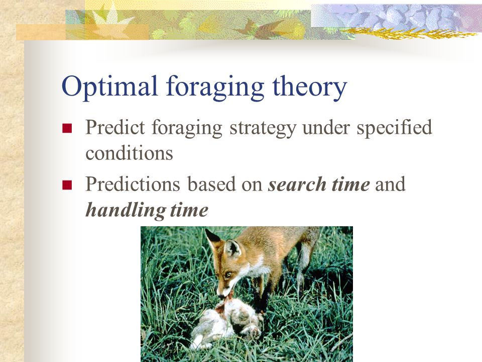 Optimal foraging theory Predict foraging strategy under specified conditions Predictions based on search time and handling time