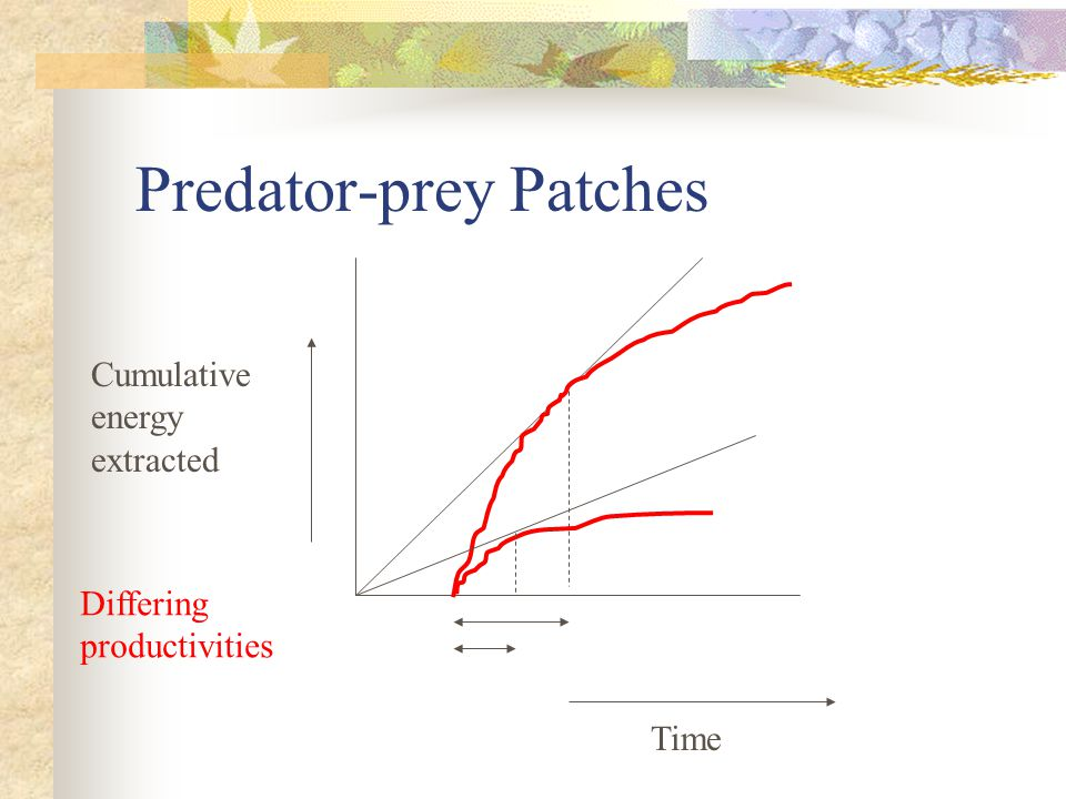 Predator-prey Patches Time Cumulative energy extracted Differing productivities