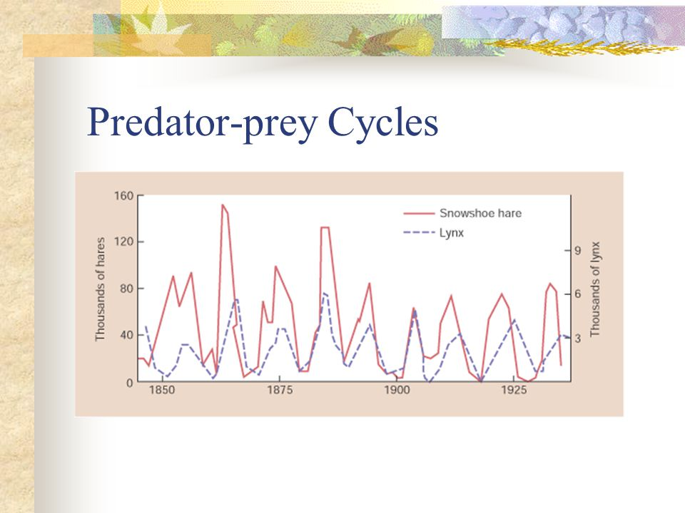 Predator-prey Cycles