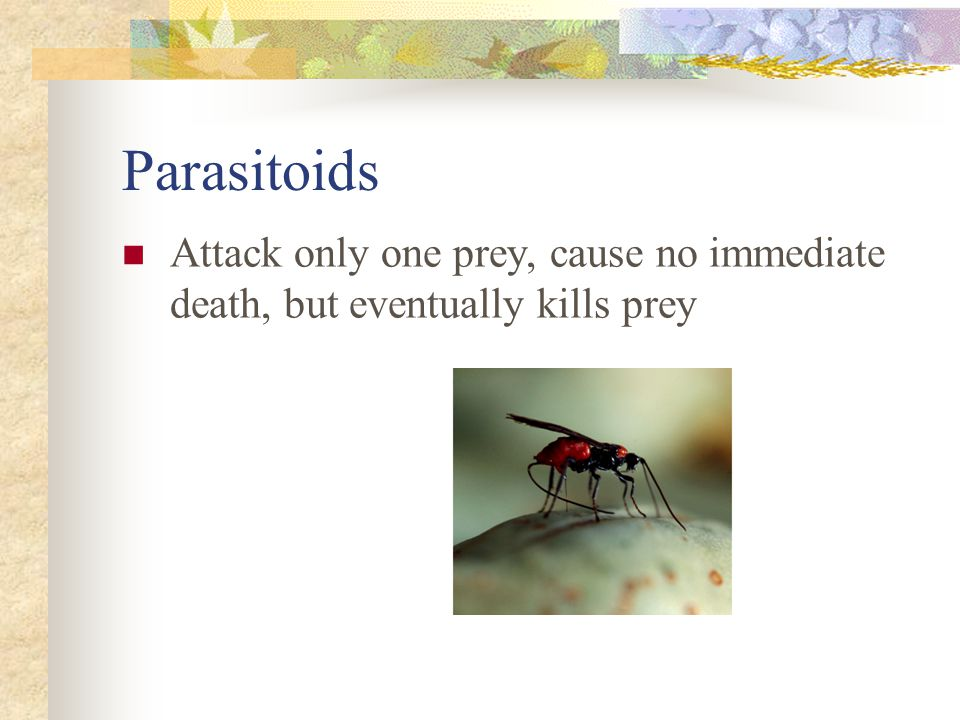 Effects of predators on prey True predators and parasitoids kill prey Grazers and parasites do not kill prey Affect both individual prey as well as prey populations