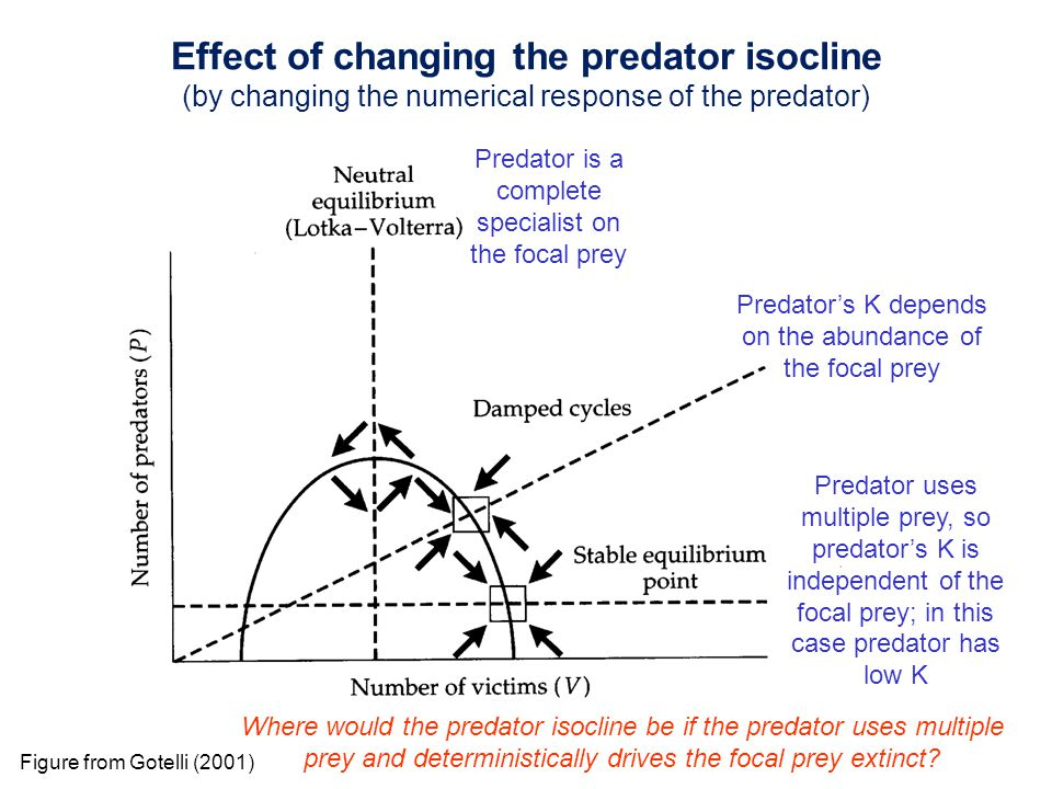 Predator is a complete specialist on the focal prey Predator's K depends on the abundance of the focal prey Predator uses multiple prey, so predator's K is independent of the focal prey; in this case predator has low K Where would the predator isocline be if the predator uses multiple prey and deterministically drives the focal prey extinct.