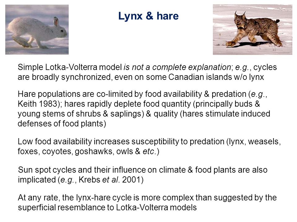 Hare populations are co-limited by food availability & predation (e.g., Keith 1983); hares rapidly deplete food quantity (principally buds & young stems of shrubs & saplings) & quality (hares stimulate induced defenses of food plants) Low food availability increases susceptibility to predation (lynx, weasels, foxes, coyotes, goshawks, owls & etc.) Simple Lotka-Volterra model is not a complete explanation; e.g., cycles are broadly synchronized, even on some Canadian islands w/o lynx Sun spot cycles and their influence on climate & food plants are also implicated (e.g., Krebs et al.
