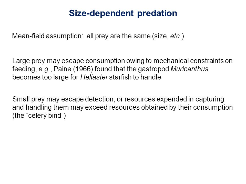 Mean-field assumption: all prey are the same (size, etc.) Small prey may escape detection, or resources expended in capturing and handling them may exceed resources obtained by their consumption (the celery bind ) Size-dependent predation Large prey may escape consumption owing to mechanical constraints on feeding, e.g., Paine (1966) found that the gastropod Muricanthus becomes too large for Heliaster starfish to handle