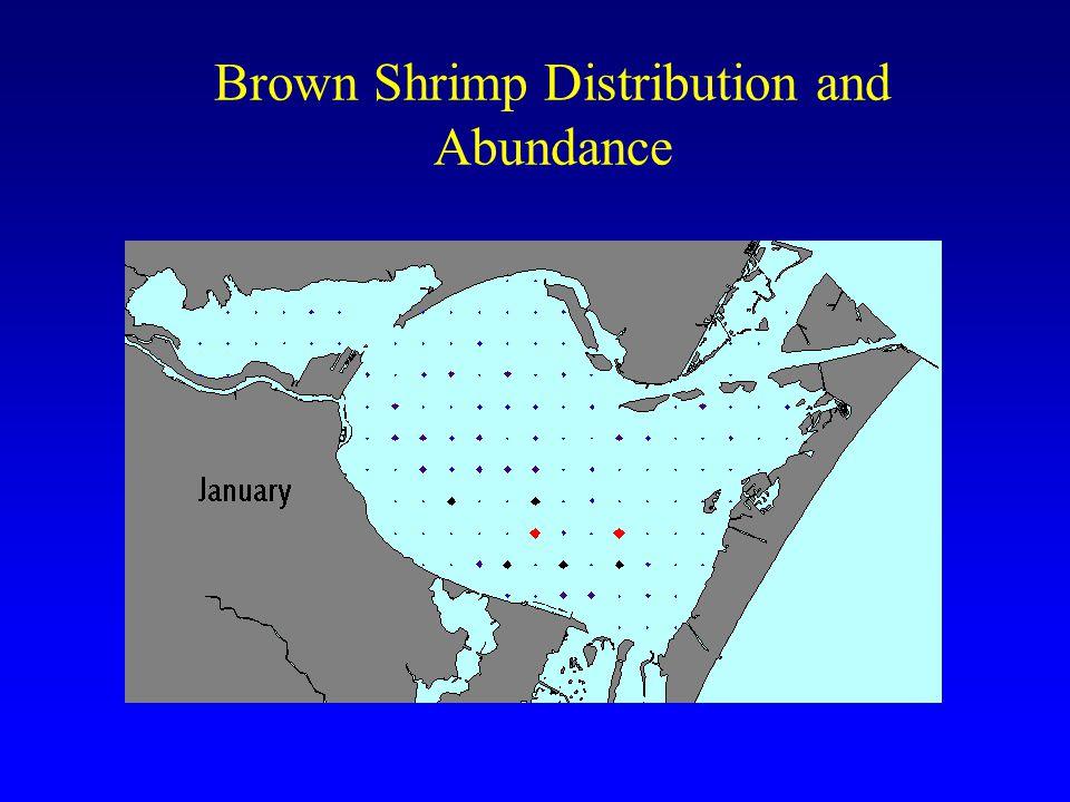 Brown Shrimp Distribution and Abundance