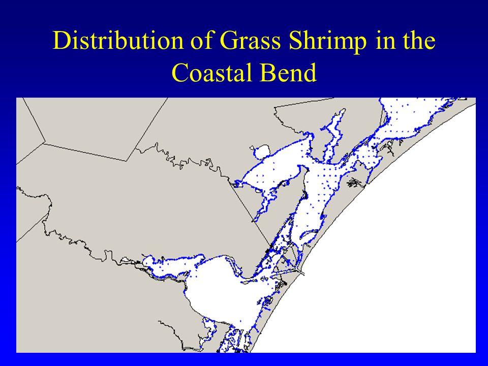 Distribution of Grass Shrimp in the Coastal Bend