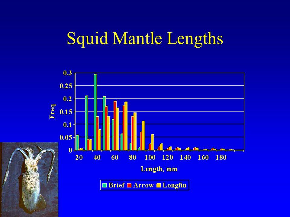 Squid Mantle Lengths
