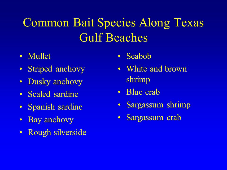Common Bait Species Along Texas Gulf Beaches Mullet Striped anchovy Dusky anchovy Scaled sardine Spanish sardine Bay anchovy Rough silverside Seabob W