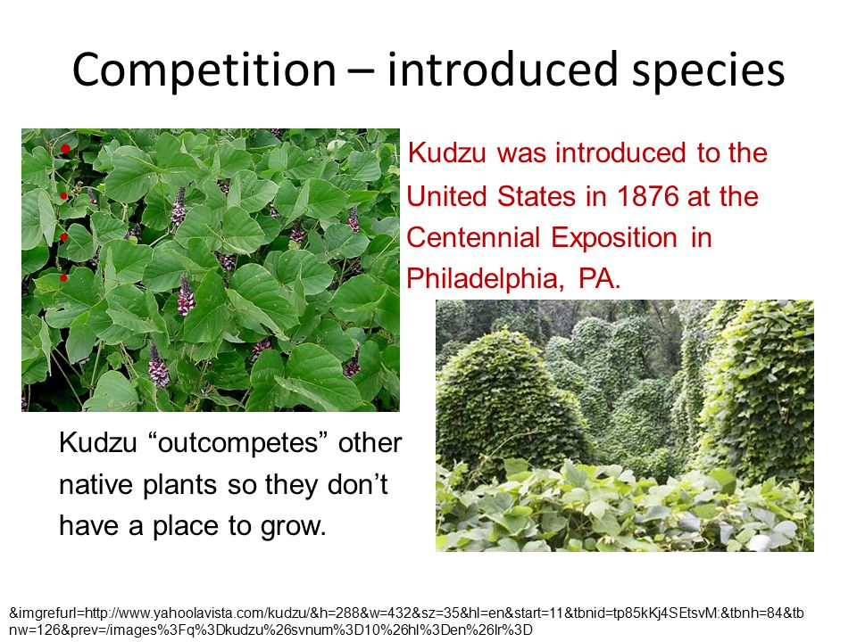Competition – introduced species Kudzu was introduced to the United States in 1876 at the Centennial Exposition in Philadelphia, PA.