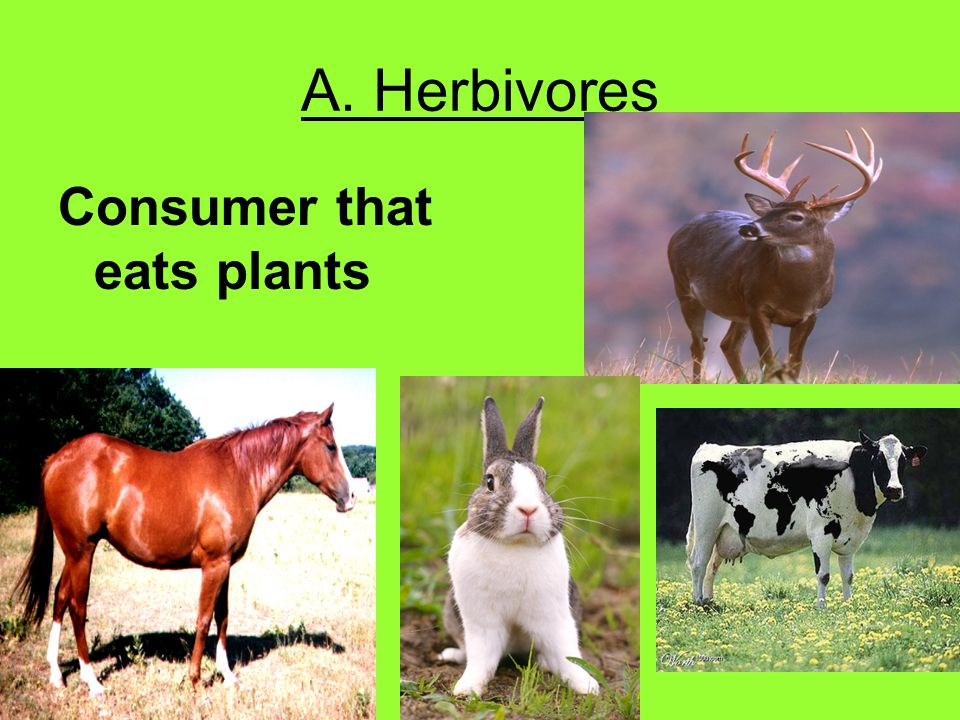 B. Carnivores Consumer that eats animals (meat).