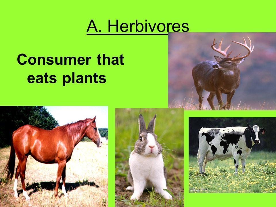 A. Herbivores Consumer that eats plants