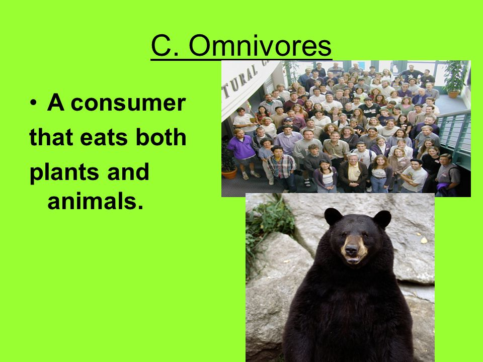 C. Omnivores A consumer that eats both plants and animals.