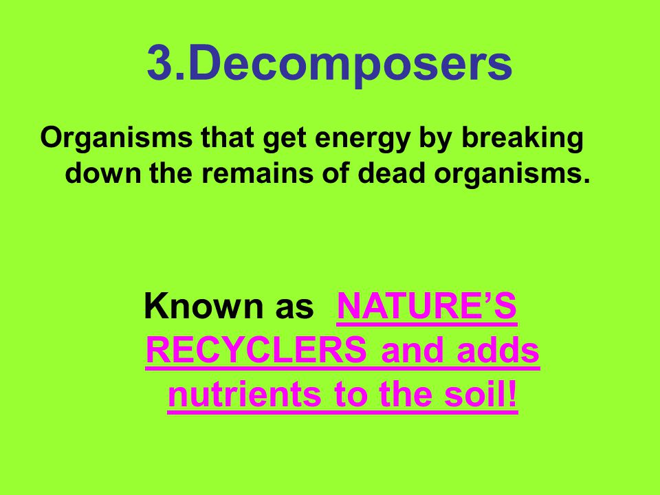 3.Decomposers Organisms that get energy by breaking down the remains of dead organisms.