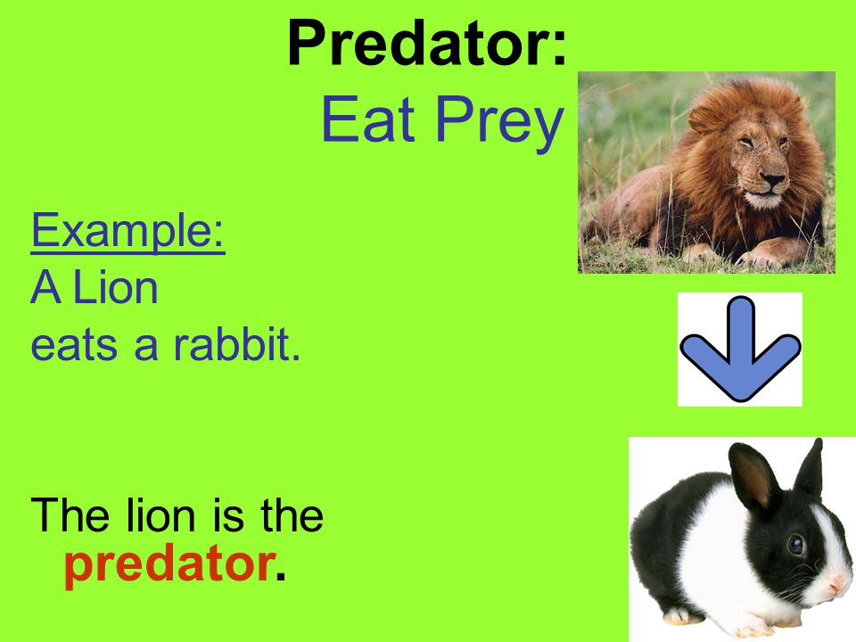 Prey: The organism that is eaten Example: The Lion (predator) eats the Rabbit (prey).
