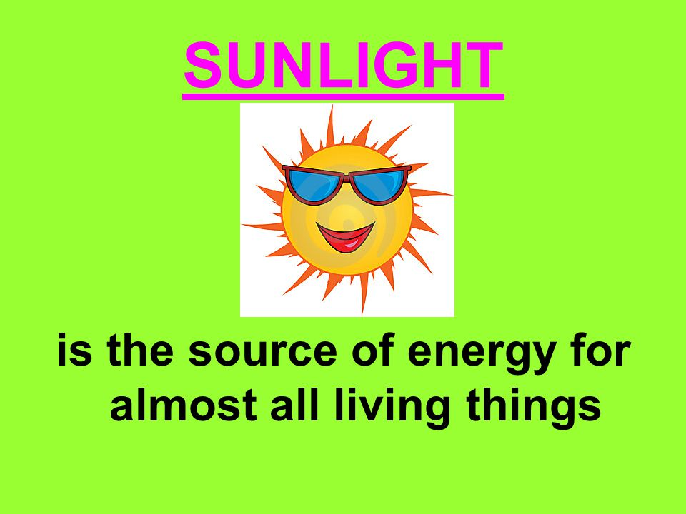 SUNLIGHT is the source of energy for almost all living things
