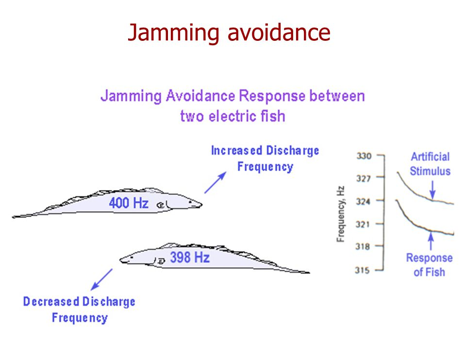 Jamming avoidance