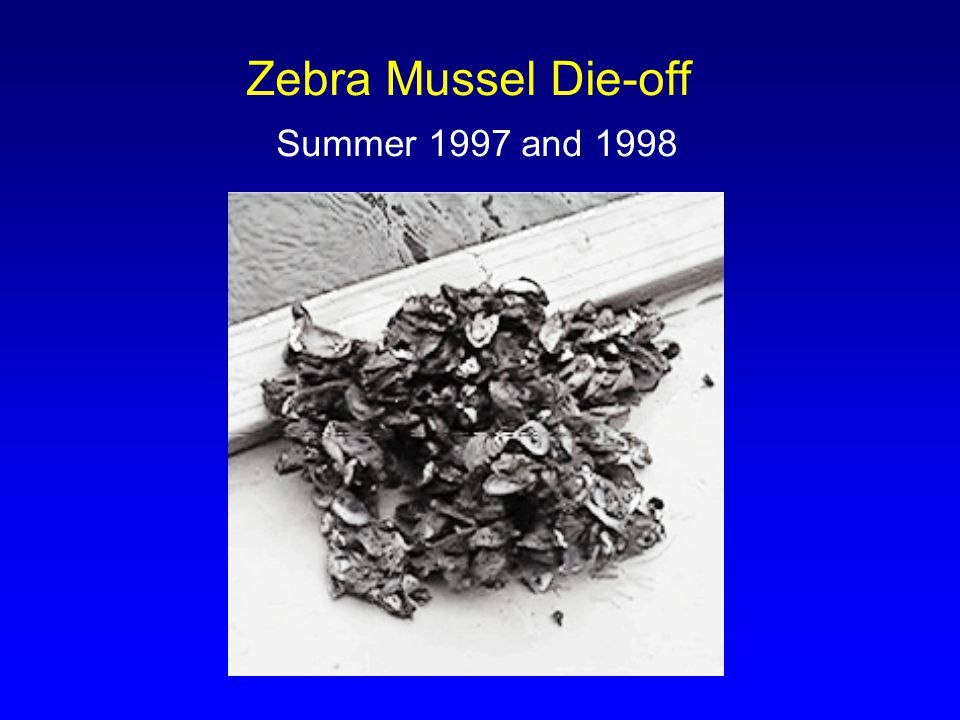 Zebra Mussel Die-off Summer 1997 and 1998