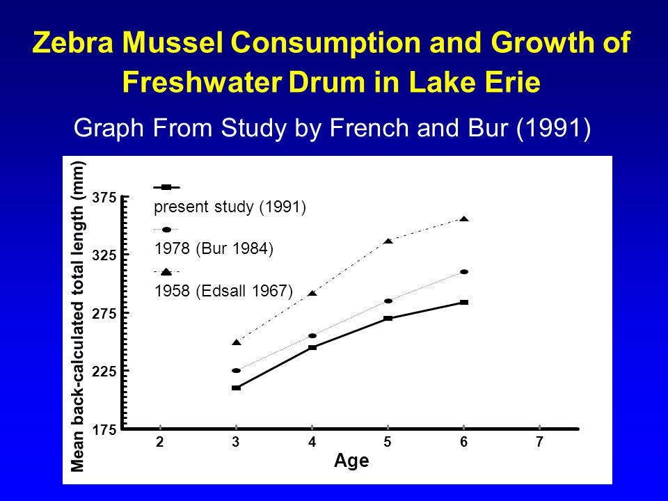 Zebra Mussel Consumption and Growth of Freshwater Drum in Lake Erie Graph From Study by French and Bur (1991) 175 225 275 325 375 Mean back-calculated total length (mm) 234567 Age present study (1991) 1978 (Bur 1984) 1958 (Edsall 1967)