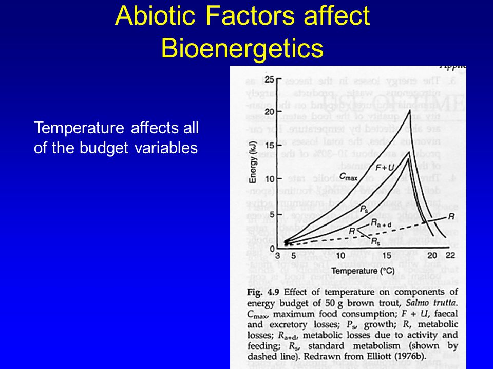37 Abiotic Factors affect Bioenergetics Temperature affects all of the budget variables