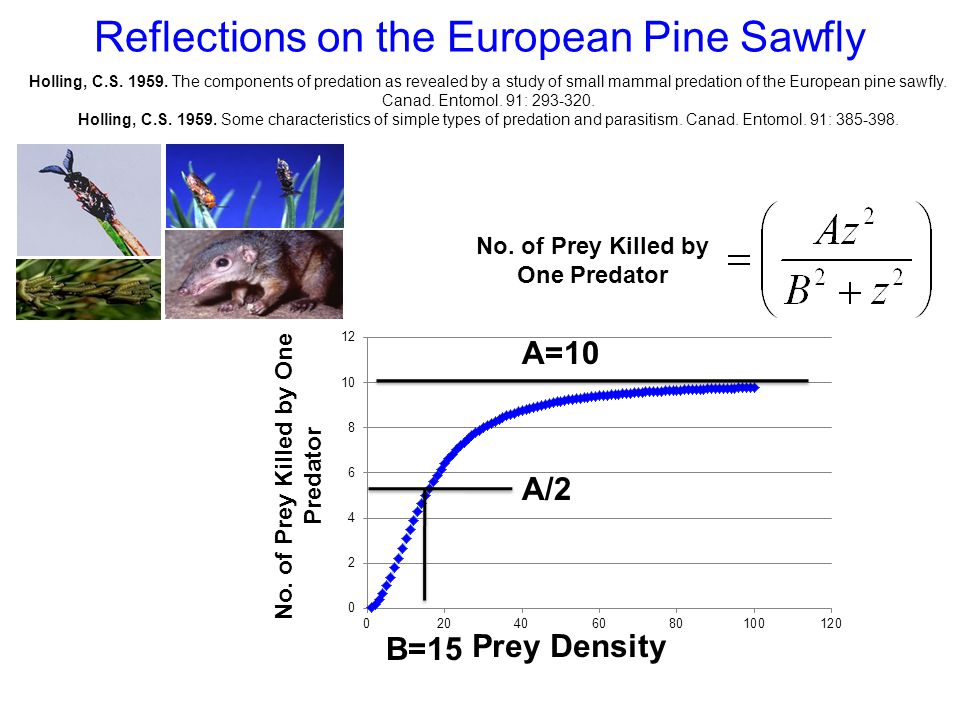 Reflections on the European Pine Sawfly No.of Prey Killed by One Predator Prey Density No.