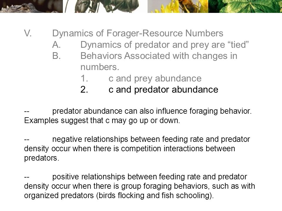 V.Dynamics of Forager-Resource Numbers A.Dynamics of predator and prey are tied B.Behaviors Associated with changes in numbers.